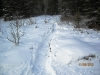 Snow shoe trail crossing Aspen