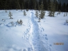 Snow shoe trail at Aspen