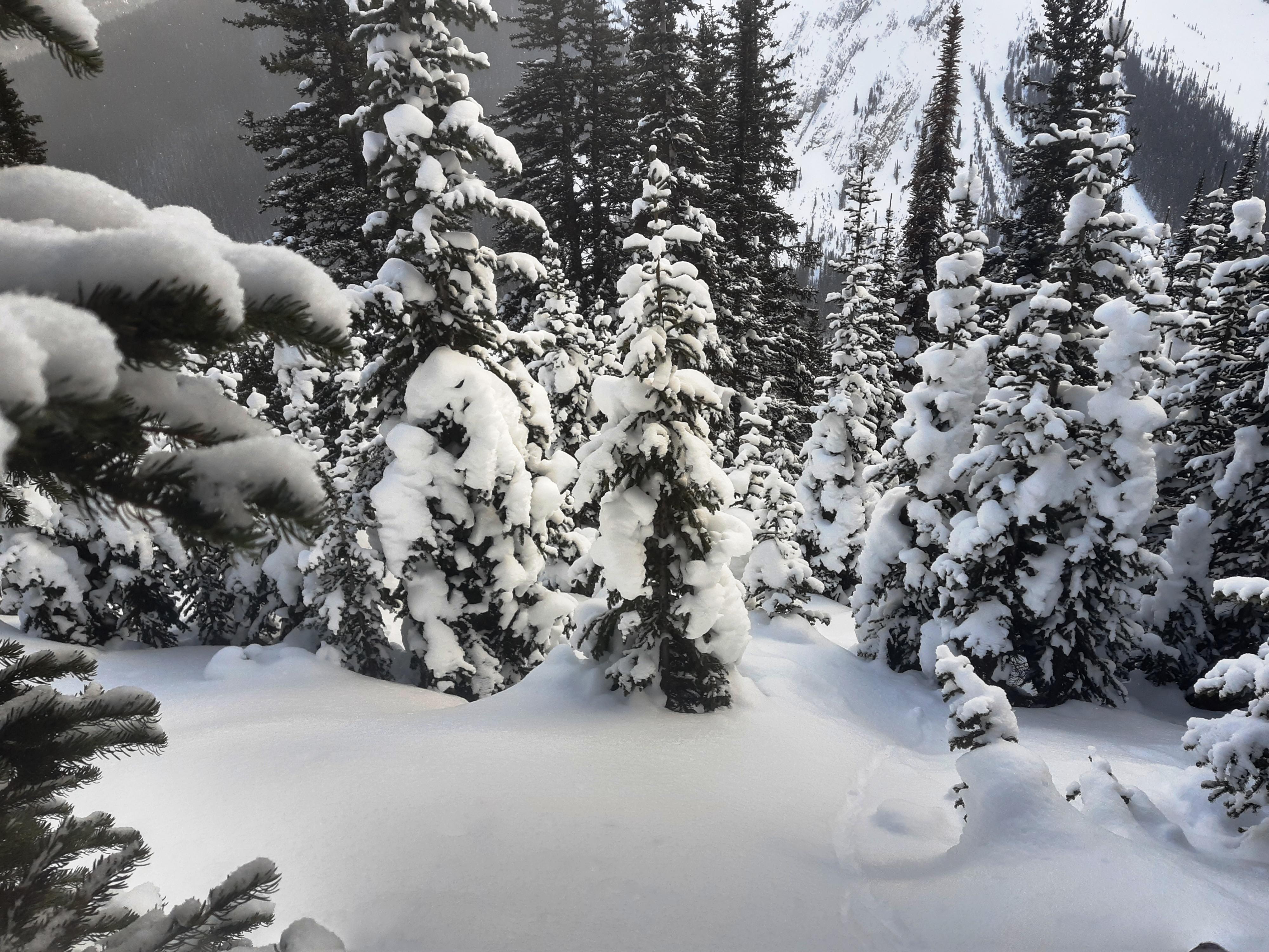 14-Beautiful-deep-snow-to-crash-down-through