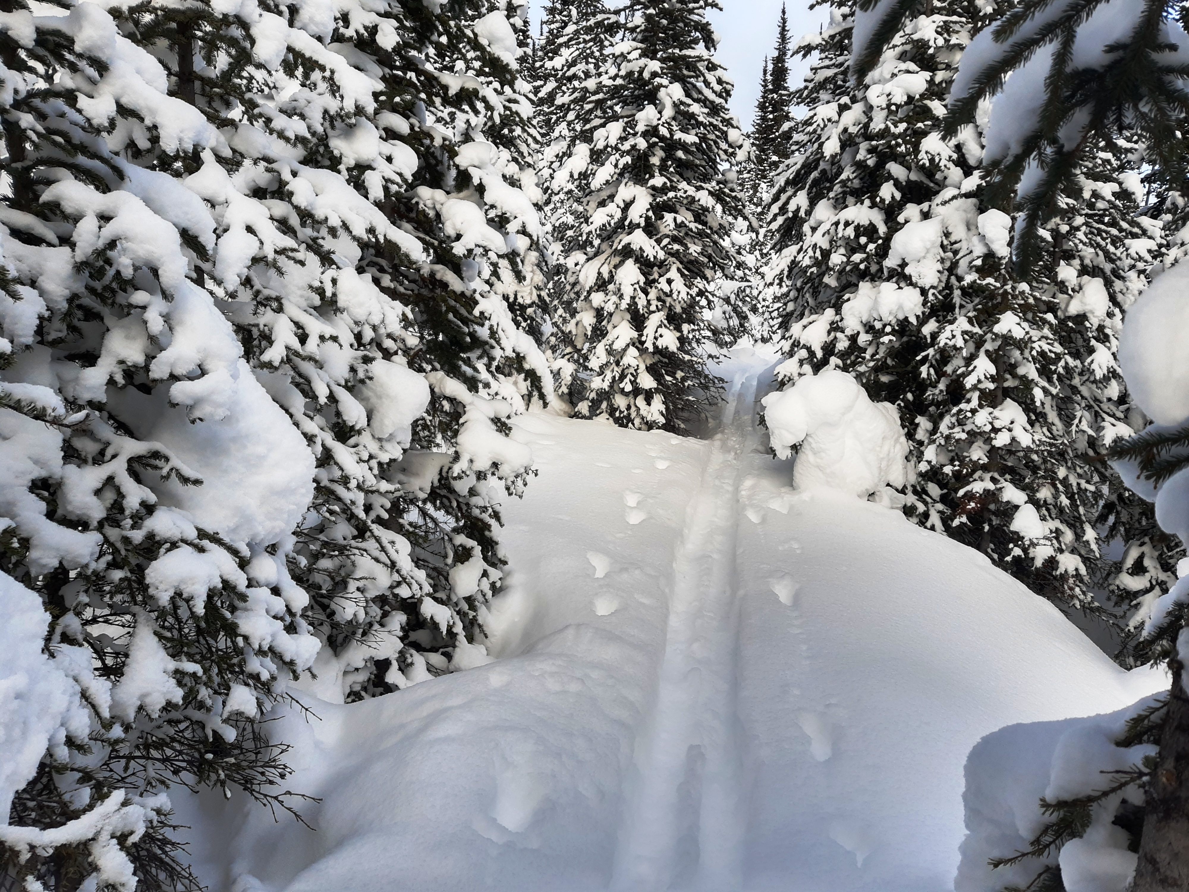 4-Following-a-back-country-ski-track