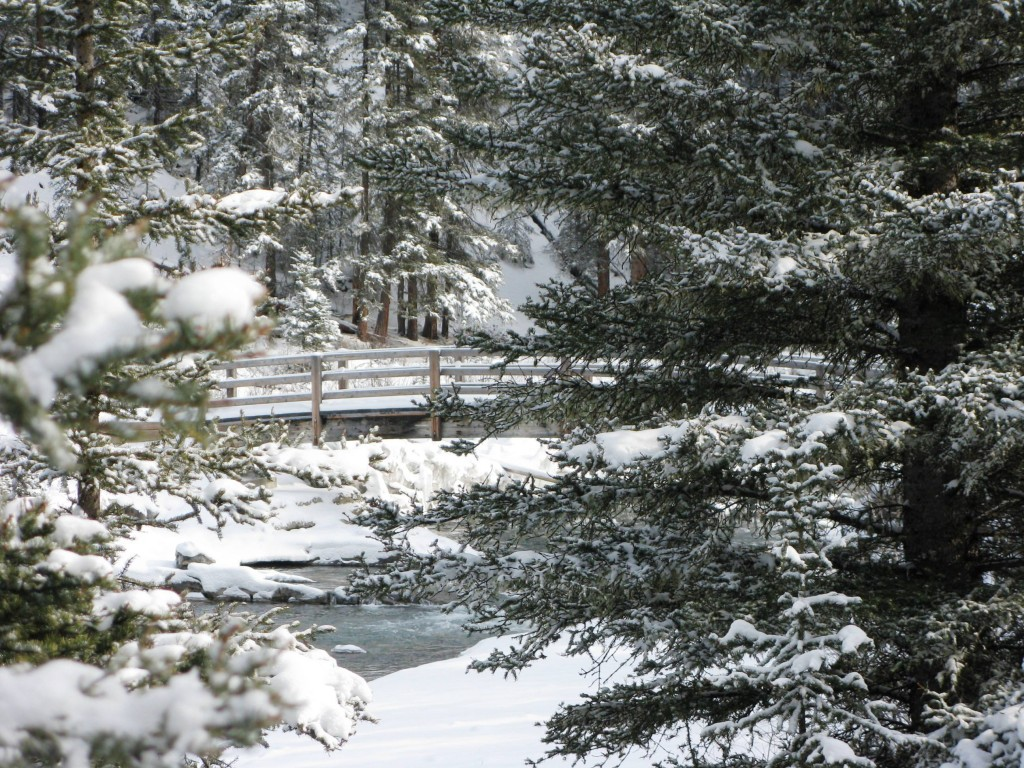 Banff Springs cross-country ski trail