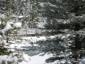 Banff Springs cross-country ski trail