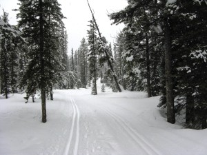 Lake Louise - Cross Country Skiing - Photo # 4