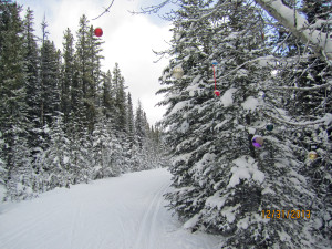 Christmas decorations hanging from tree over trail