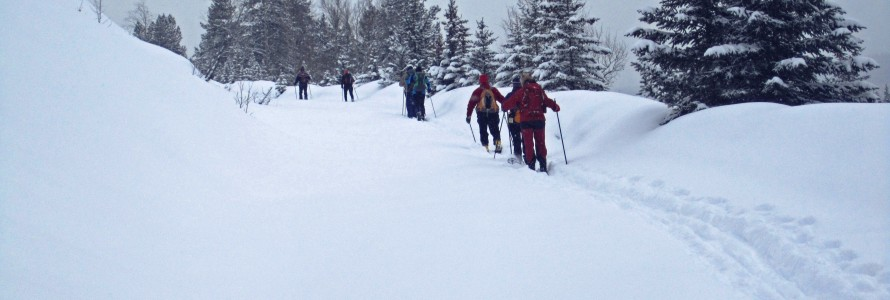 Baker Creek to Castle Mountain Cross Country Skiing