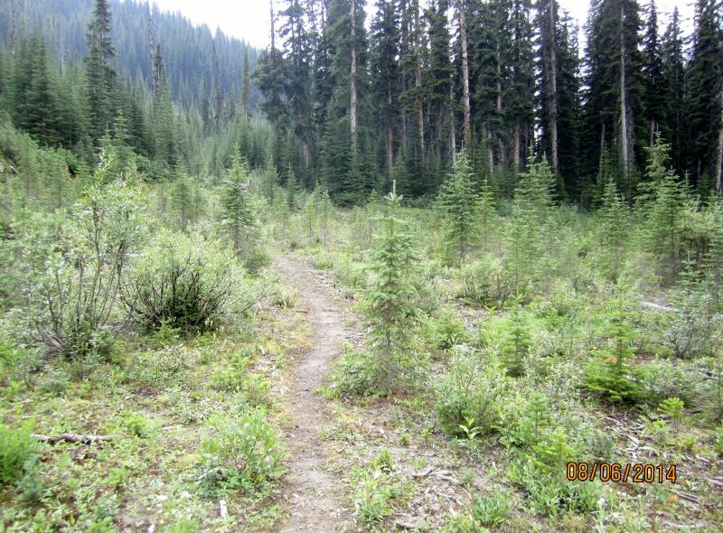 Sawmill showing trail