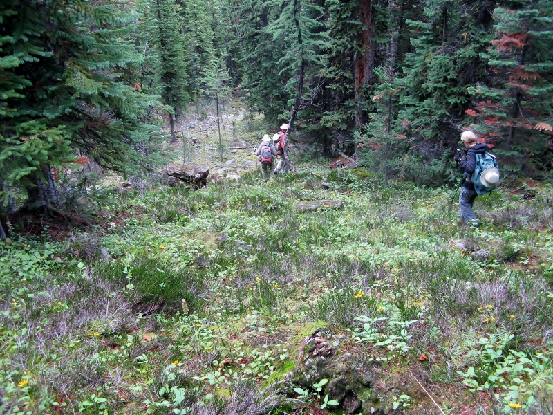 Bushwhacking down into Horseshoe Meadows