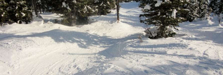Sunshine Village Banff Ski Conditions
