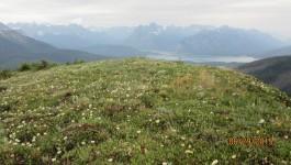 Rummel Ridge Summit Spray Lakes beyond
