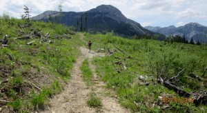 Trail through cutblock, Mt Baldy ahead